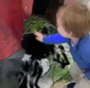 惹不起!小男孩怒扁蜘蛛整人玩具