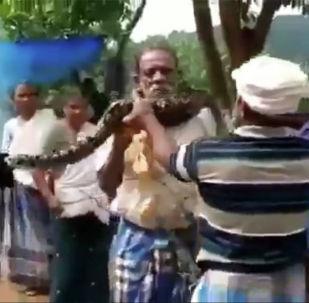 印度工人救出被蟒蛇缠脖的同事