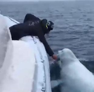 船員同白鯨玩橄欖球