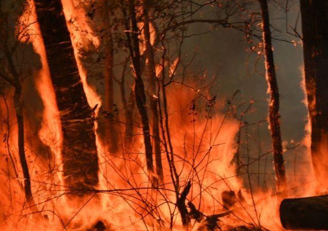 澳大利亚林火烧毁了演员罗素·克劳的一处别墅中的几栋房屋