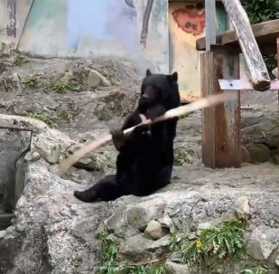 功夫熊展示高超棍術