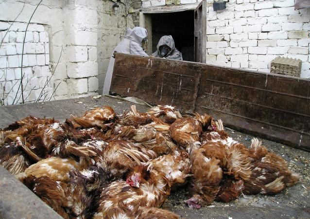 在广东已有30人患上禽流感