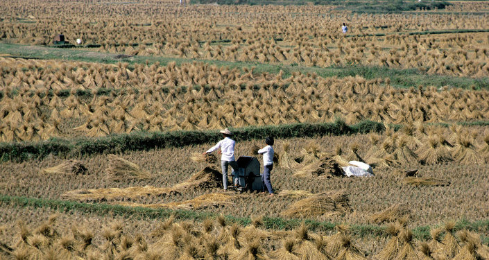 华媒:中国超级杂交稻亩产创世界新纪录