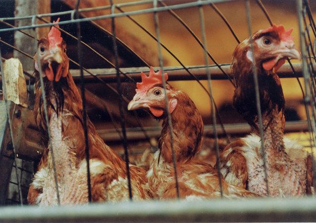 浙江省家禽市場因防治禽流感而關閉