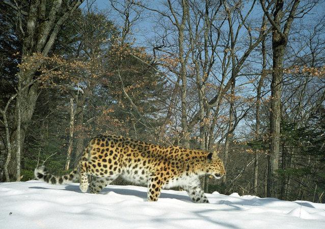 俄远东地区将举办庆祝俄自然保护区建立100周年专题图片展