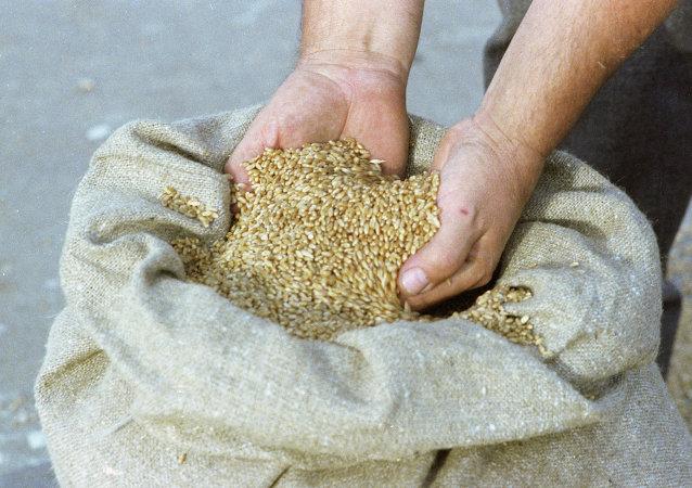 俄议员:俄罗斯考虑向朝鲜免费供应五万吨小麦