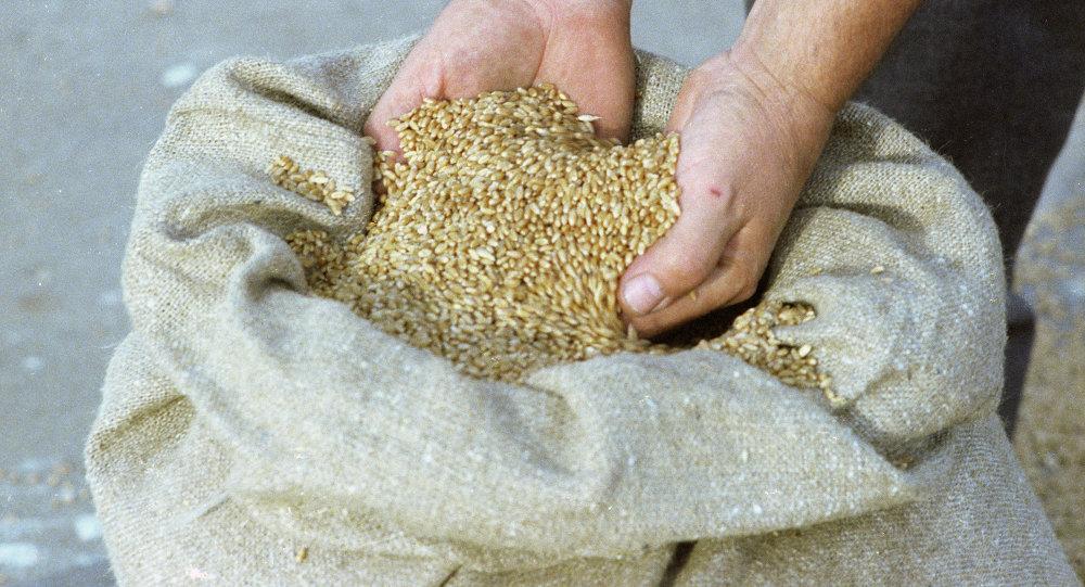 俄阿穆尔州将扩大对华农产品出口种类