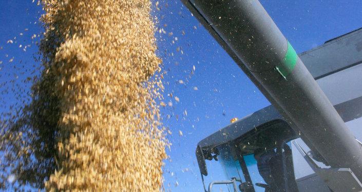 俄副州長:克麥羅沃州農業綜合體170家企業準備向中國供應其產品