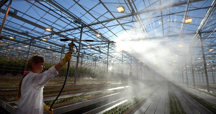 专家:俄车里雅宾斯克州需中国投资帮助建设农作物深加工企业