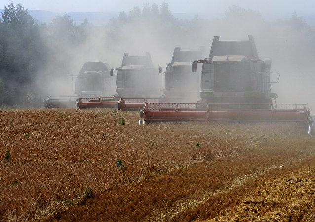 世界自然基金会:德国出现的昆虫灭绝现象可导致粮食产量下降