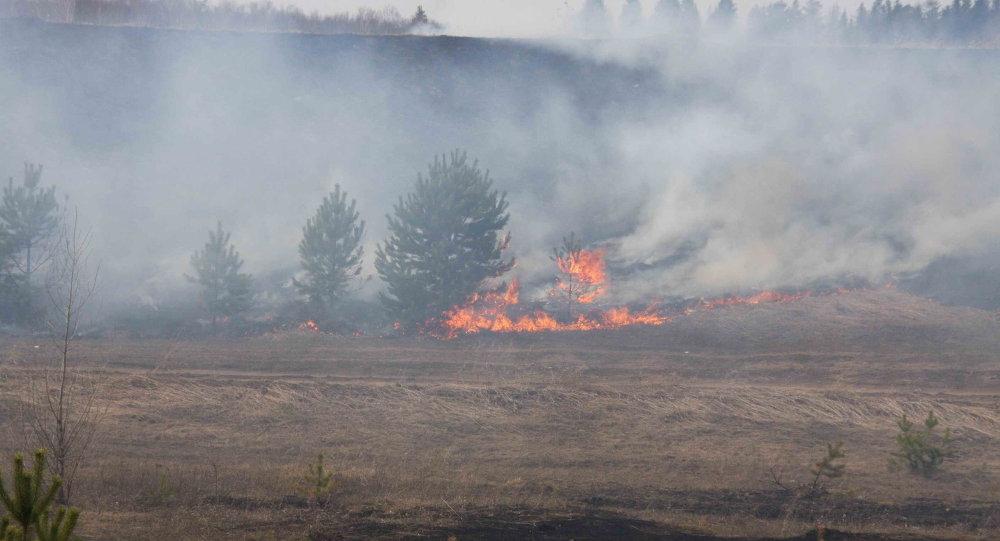 森林火灾(图片资料)
