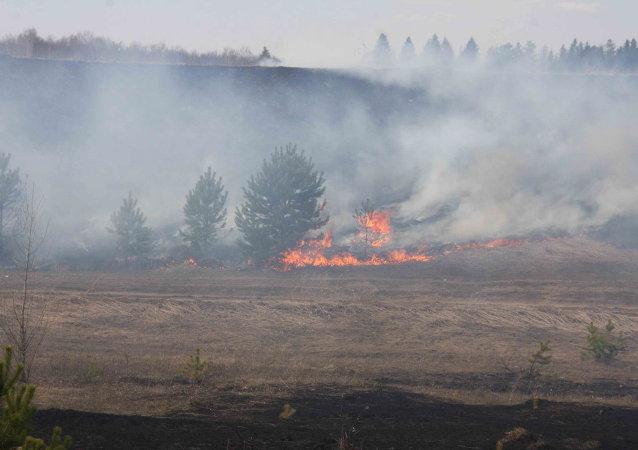 俄远东森林火灾一昼夜毁林2500多公顷