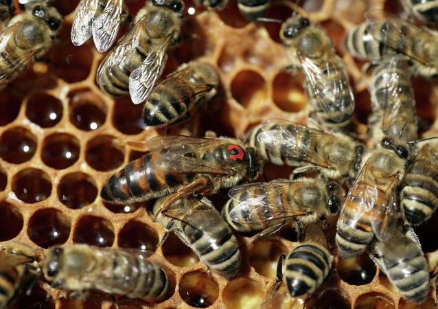 俄一对华出口蜂蜜企业产品中查出违禁药品