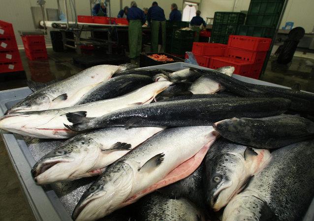 生產商銷售轉基因魚須注明