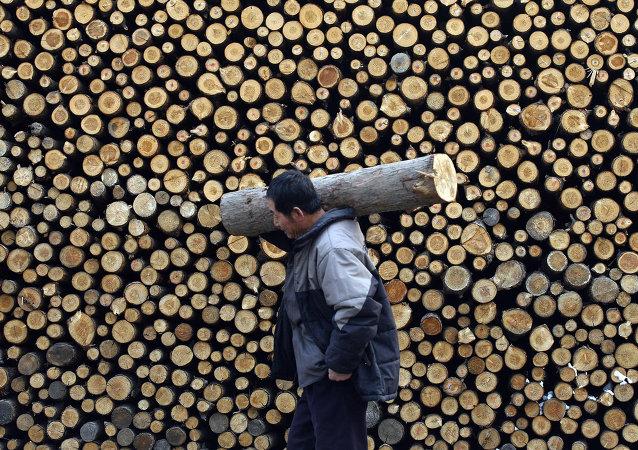 世界自然基金会呼吁俄罗斯禁止在东北虎栖息地非法采伐