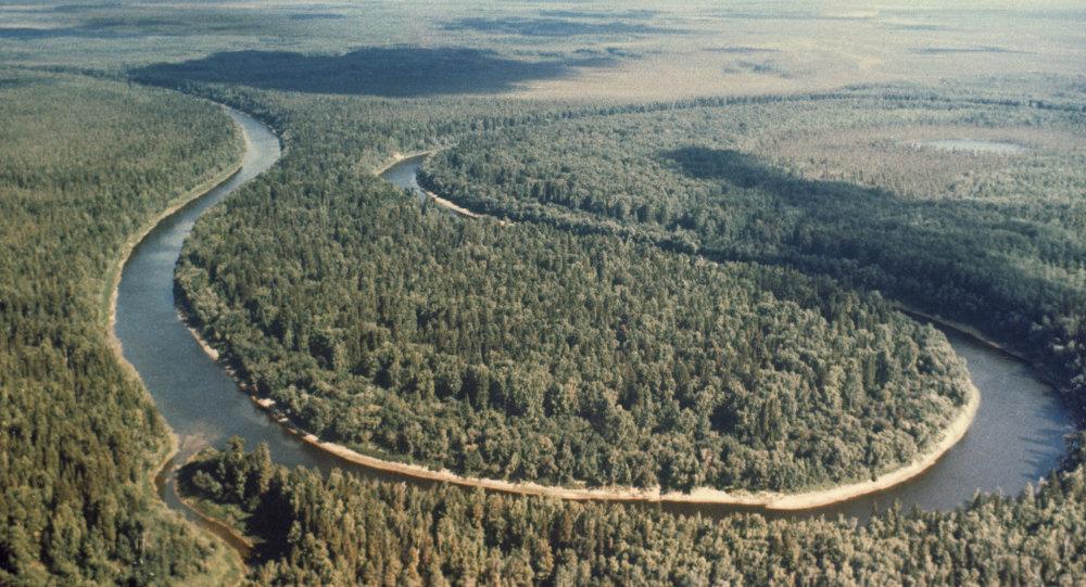 森林論壇討論未來十五年全球可持續森林政策
