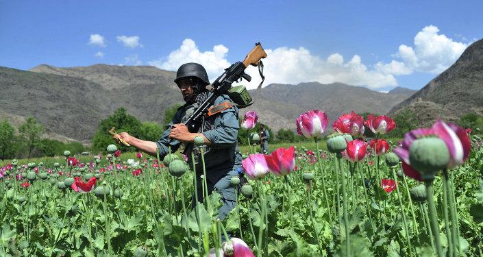 奧巴馬政府拒絕有關阻止阿富汗海洛因外流的計劃