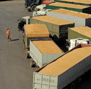 俄农业部:俄本农业年度谷物出口量或将为3000万吨