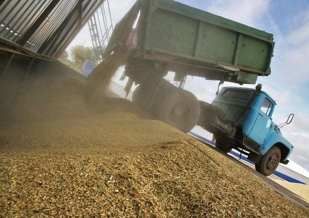 俄鞑靼斯坦共和国政府批准启动俄中粮食加工项目