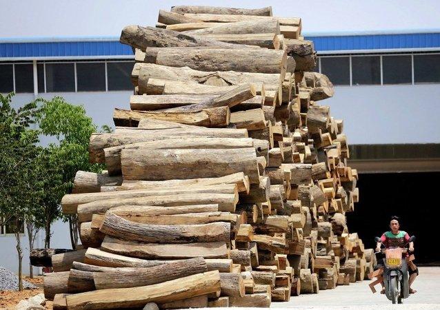 中國成俄伊爾庫茨克州木材最大買家
