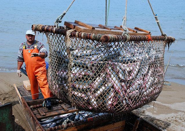 中國農業部:中方願與俄方繼續強化邊境水域漁業漁政合作