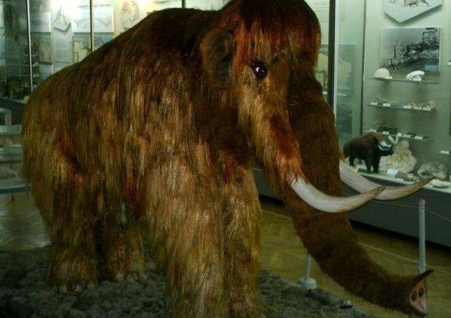 媒體:學者聲明長毛猛獁象將回歸