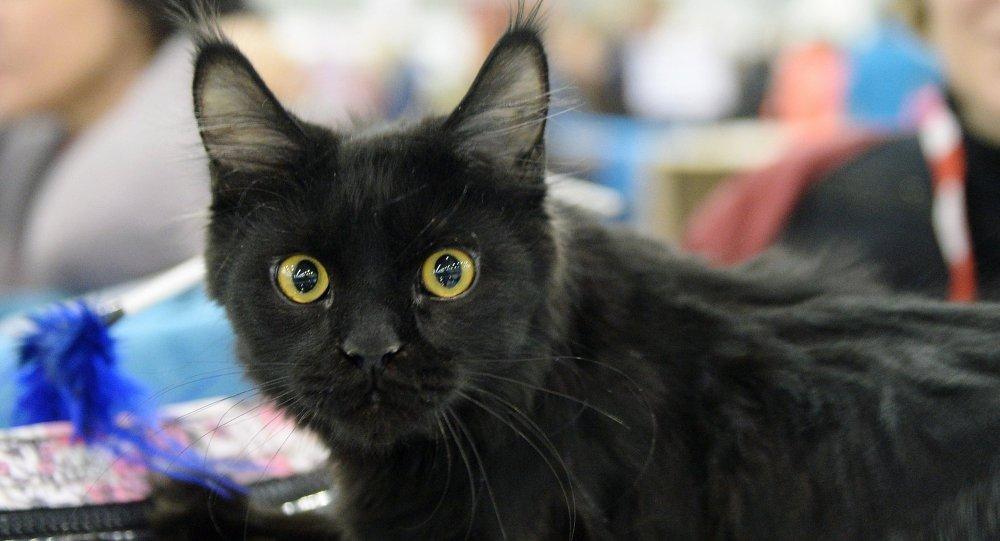 日本安保人员在超过一年半的时间里禁止两只猫进入博物馆
