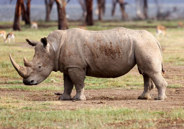 坦桑尼亚当局逮捕了四名被控走私犀牛角的中国公民