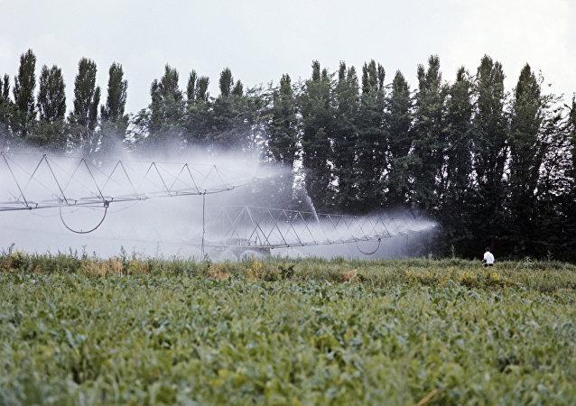 俄學者研制出「固體水」以應對乾旱