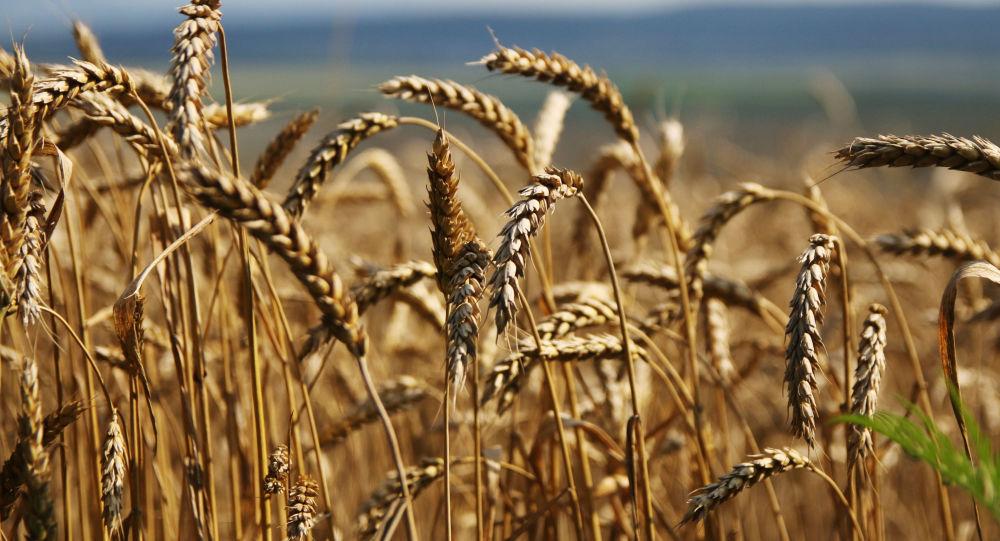 俄罗斯政府支持将粮食出口零关税措施至少再实施2年
