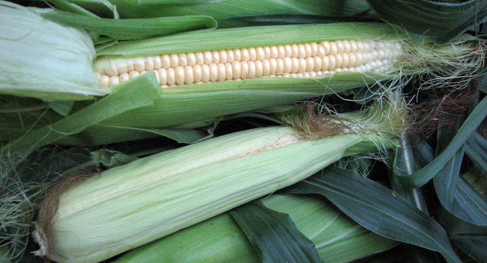 俄农业集团首批5000吨玉米已运往中国