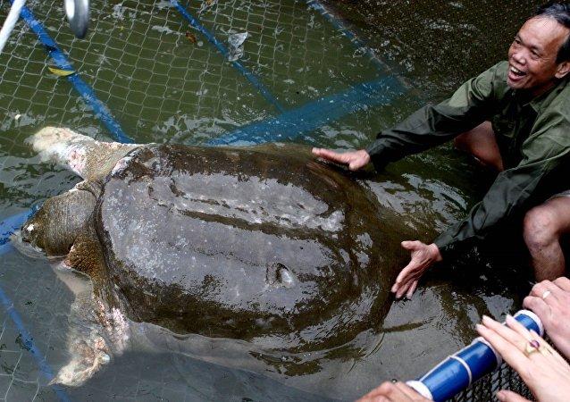 一隻被視為越南傳統象徵的長壽龜在該國黨代會前去世