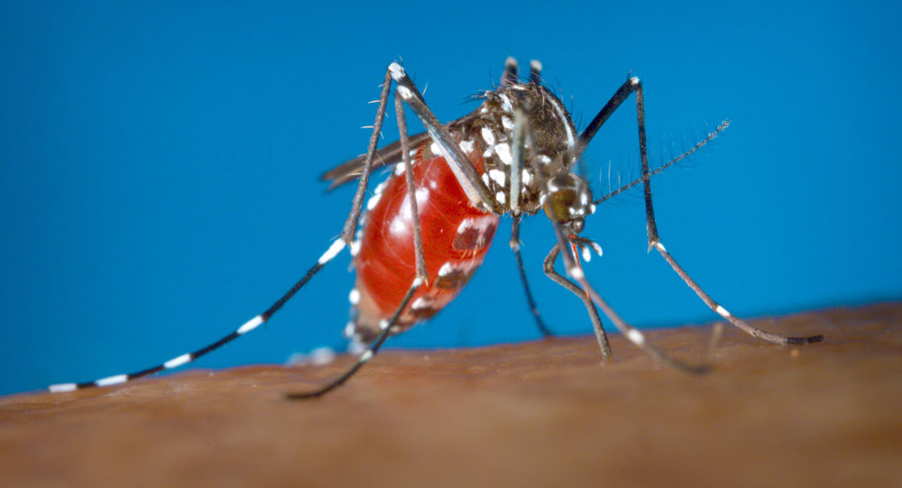 一名43岁的德国妇女因蚊虫叮咬而被截除双腿和手臂