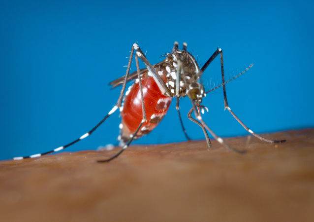 一名43歲的德國婦女因蚊蟲叮咬而被截除雙腿和手臂