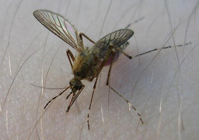 美國對蚊子使用生物武器
