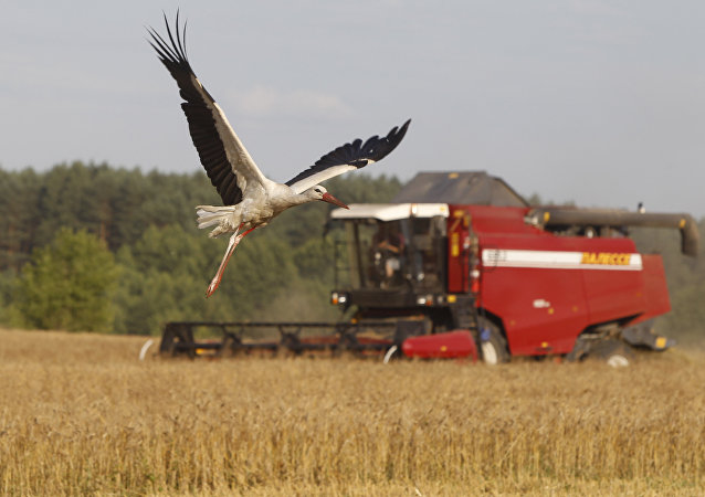 俄農業部長:2017年俄糧食產量為1.34億噸出口或將達到4700萬噸