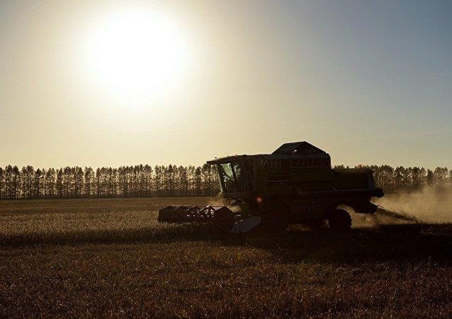 """""""俄罗斯农业""""集团签署对华出口油粕油渣协议"""
