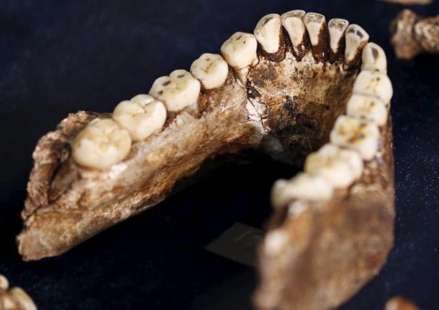 人類學家將可通過牙齒判斷古人類性別