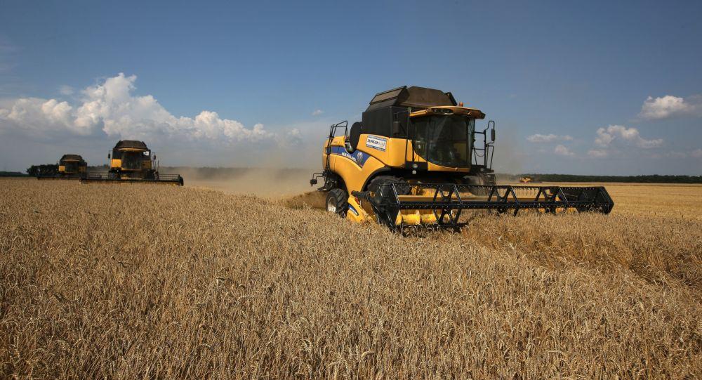 俄罗斯本农业年对华粮食出口量创纪录达12万吨