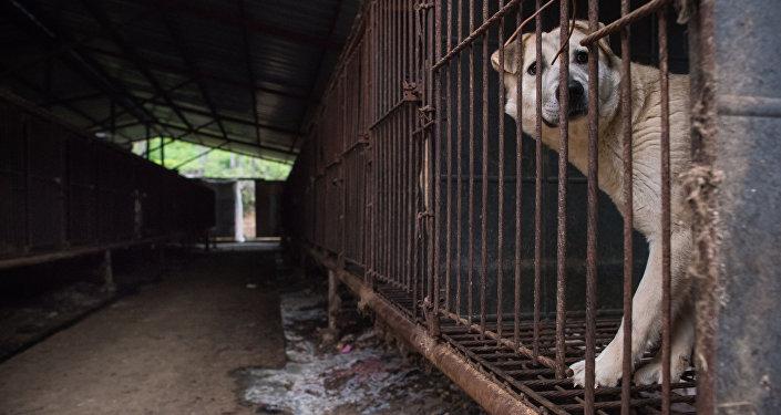 动物权利保护者解救韩国狗肉市场内的200只狗狗