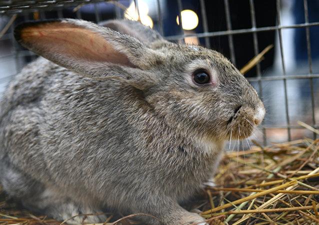 俄中公司簽署關於在俄沃羅涅日州成立兔肉生產廠合同