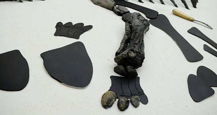媒體:科學家在南極發現一噸多恐龍遺骸