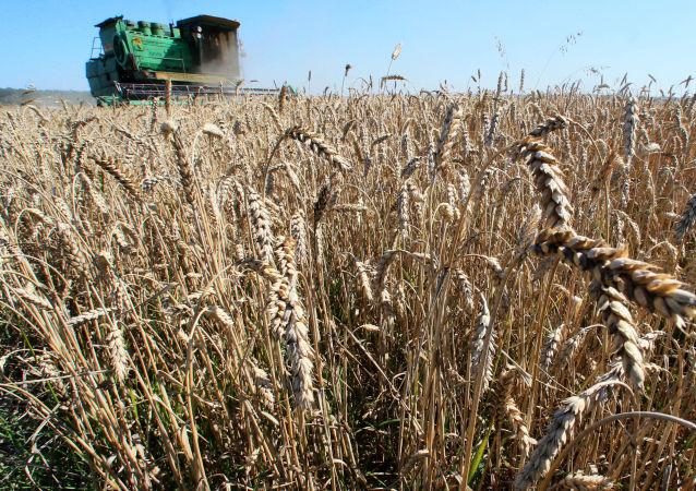美農業部:2018/19年度俄羅斯仍將領銜全球小麥出口