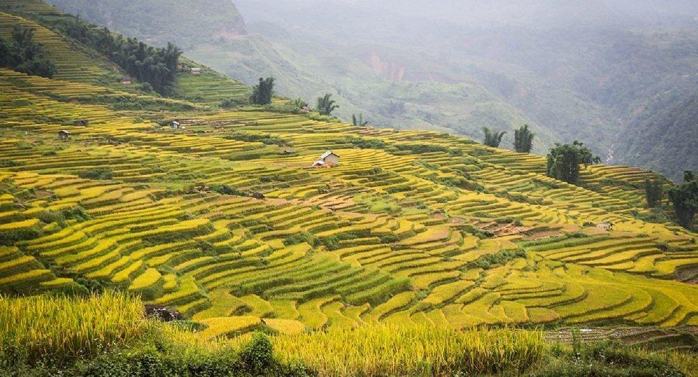 越南驻俄大使:越南希望扩大对俄农产品出口