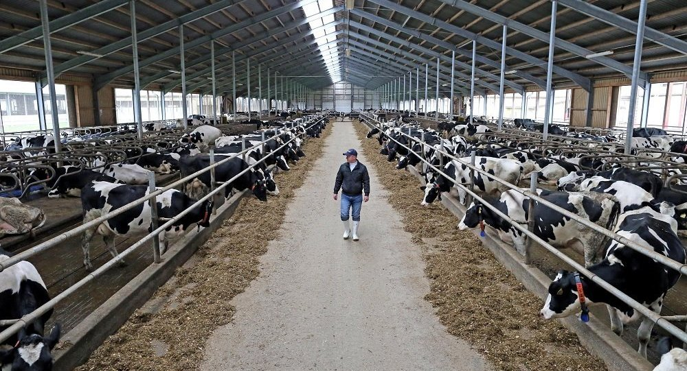 俄羅斯與以色列將在11月簽署農業領域合作路線圖