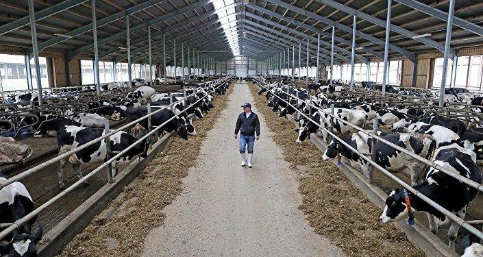俄联邦动植物卫生监督局已解除中国向俄供应动物饲料的禁令