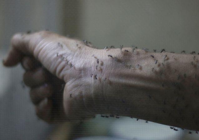 布滿蚊子的手