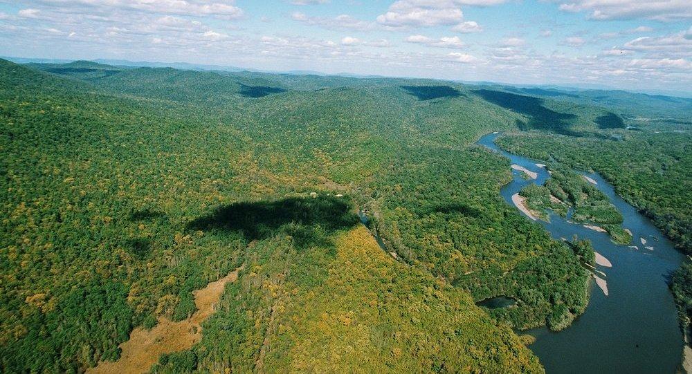 """俄阿穆尔州已为首批""""远东公顷""""项目划出50万公顷林区"""