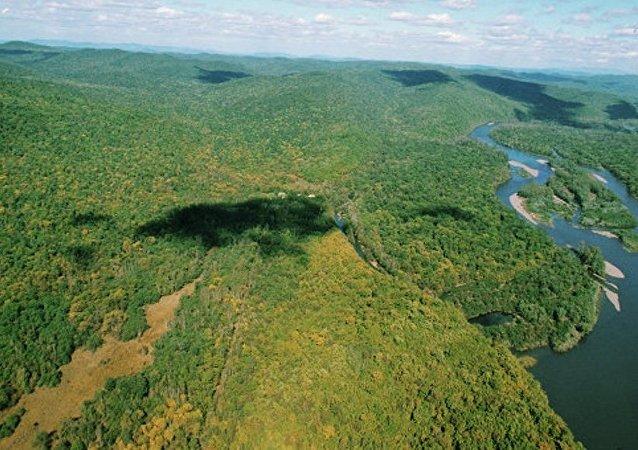 俄罗斯远东一昼夜2900公顷森林被烧毁