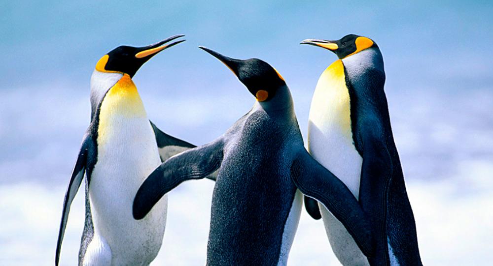 世界最大的企鹅帝国已有近90%企鹅死亡
